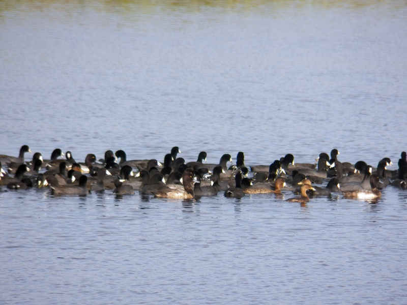 coots-n-things