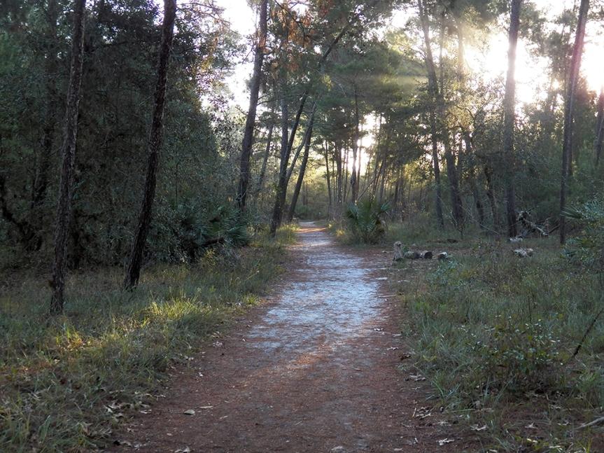 sand-pine-trail