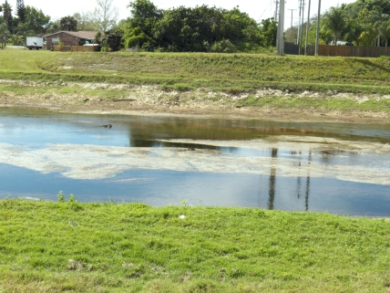 The canal bottom is starting to get exposed.