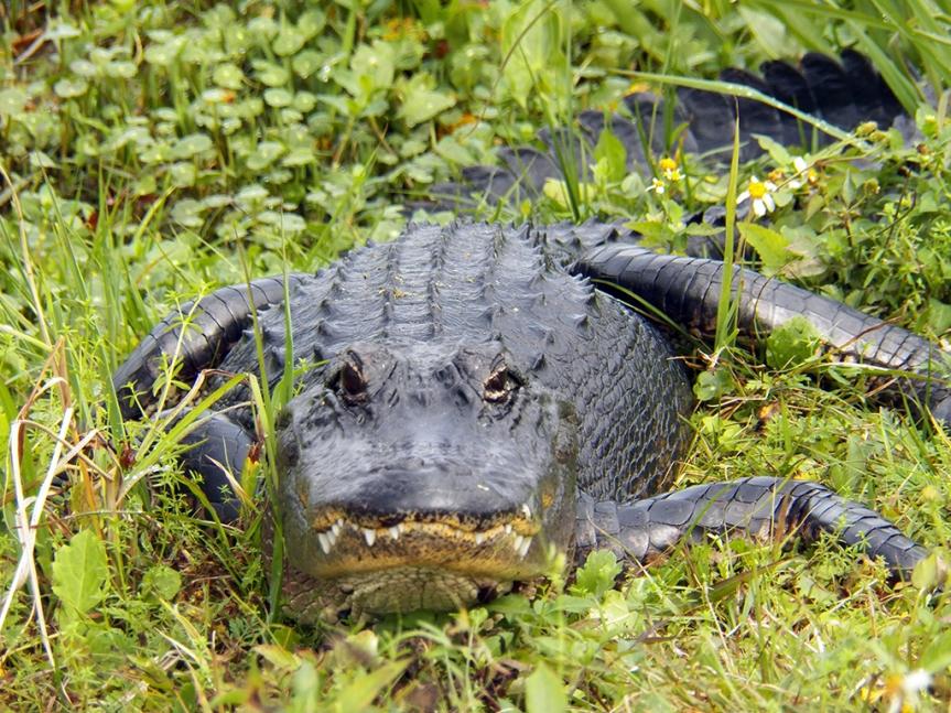 front-gator