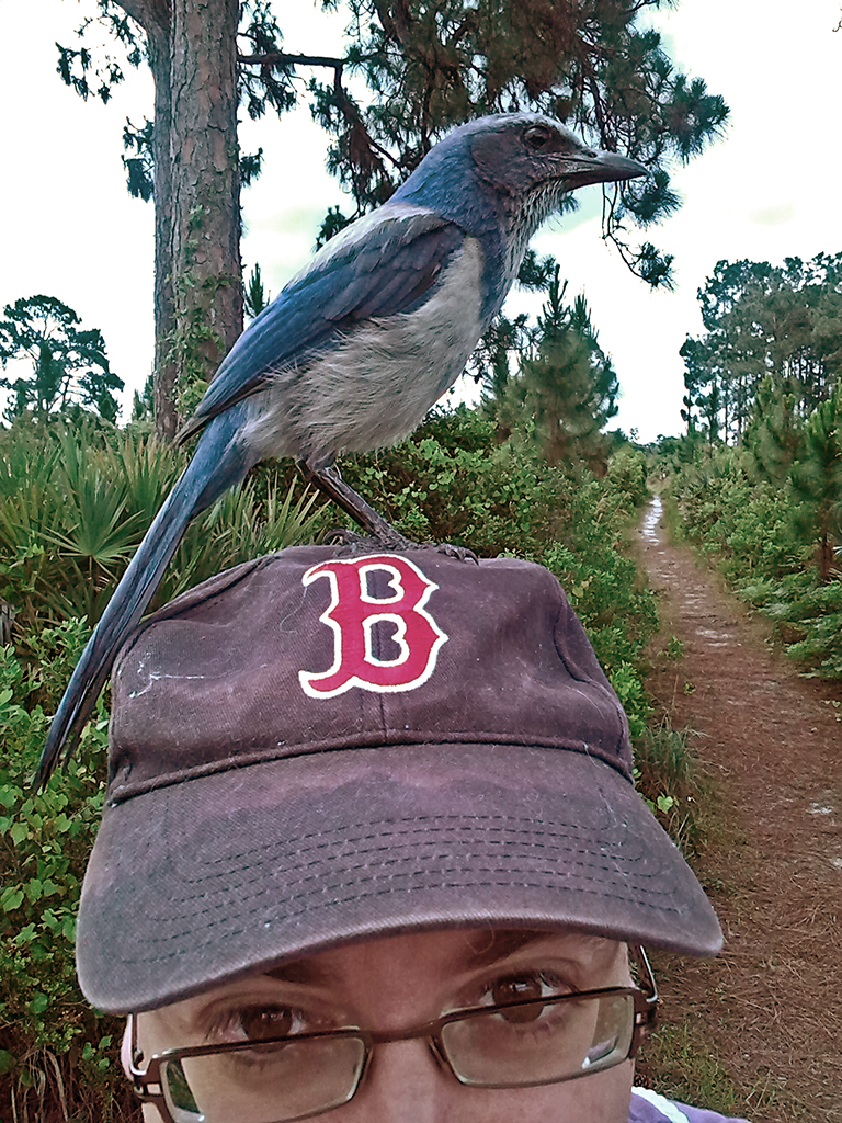 scrub-jay-christopher