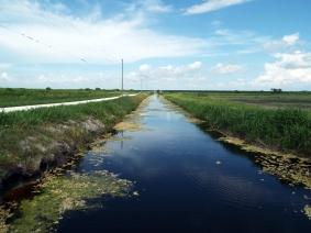 Canal near swallows.