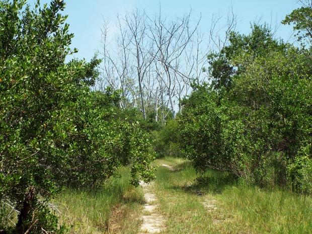 scrub-path