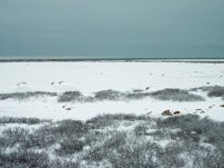 tundra-buggy-landscape2