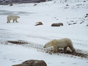 two-bears1