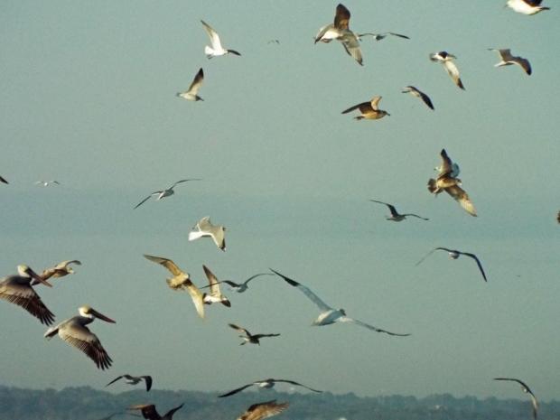 birds-fill-the-air