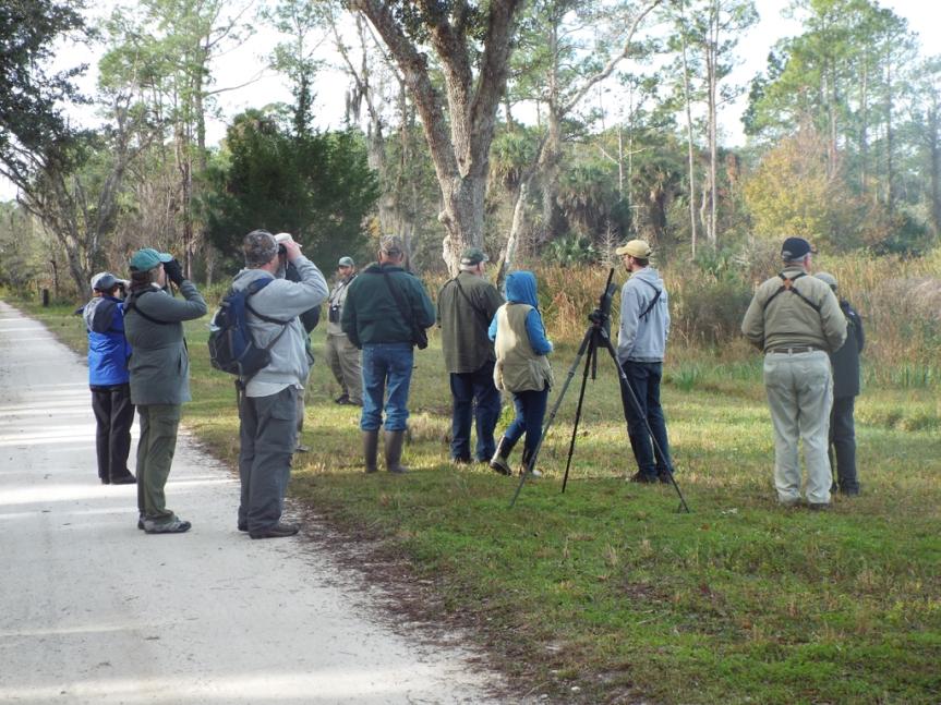 flock-of-birders
