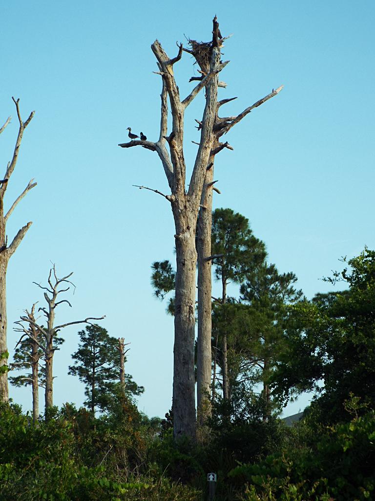 wood-ducks-tree