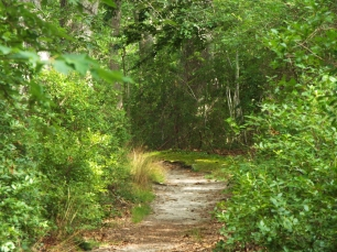 The trail at Beech Forest Park