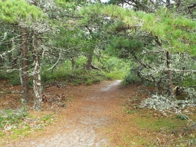 Trail at Morris Island