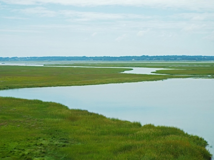 Salt Marsh at Coast Guard Beach