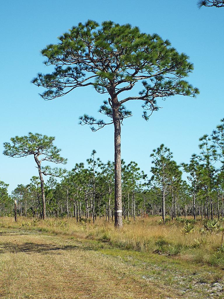 rcw-tree1