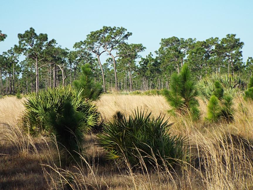 wire-grass