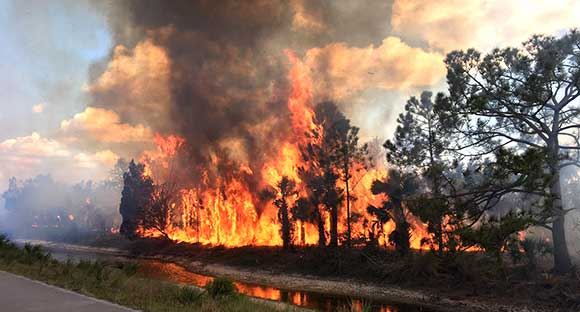 Merritt-Island-Brush-Fire-580-4