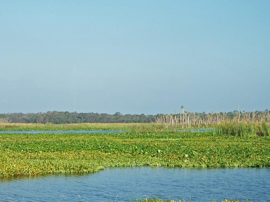 orlando-wetlands-park1