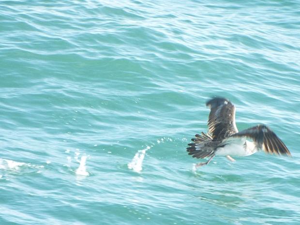coreys-shearwater-takeoff