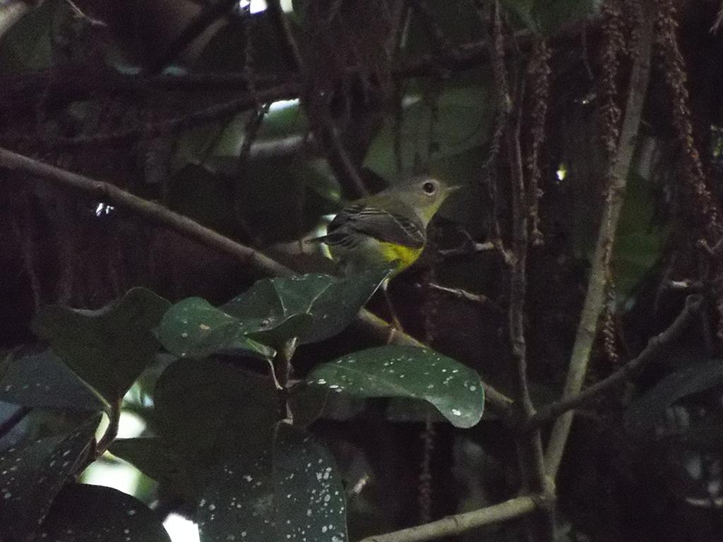 meade botanical garden lonely birder