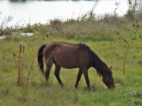 Wild Horse at Sweetwater Wetlands Park
