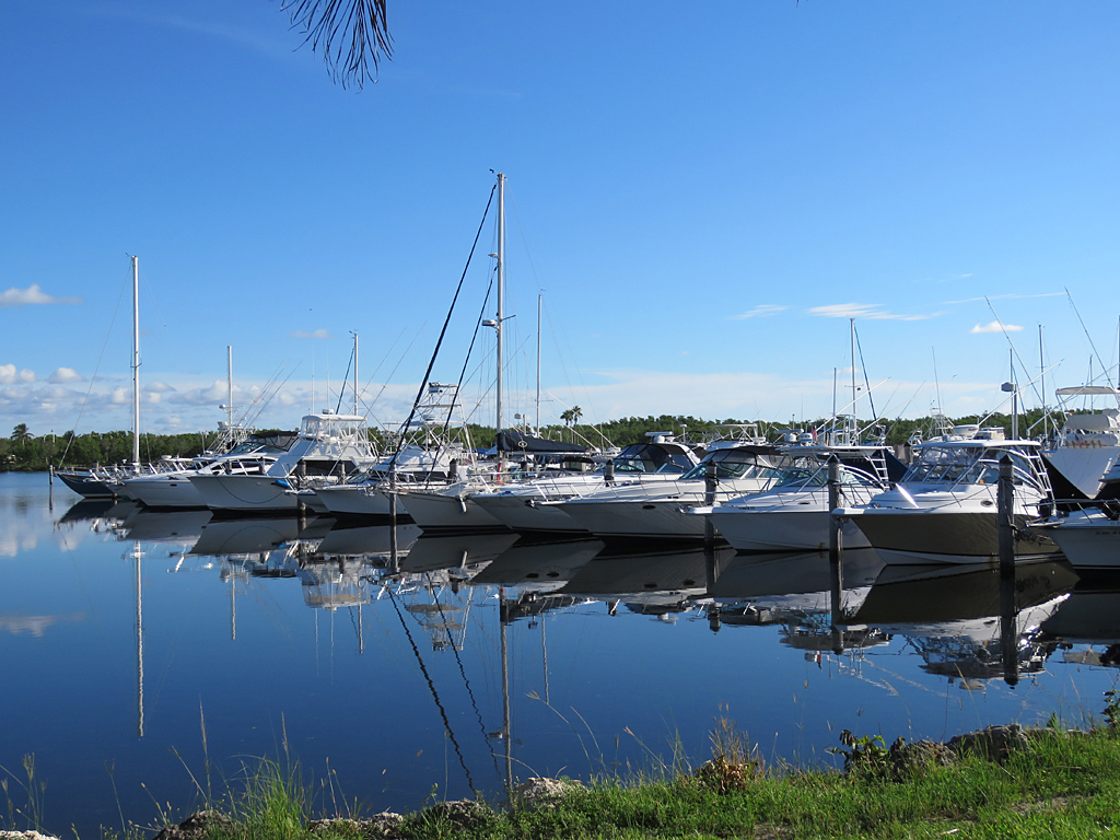 a row of fishing and pleasure boats in a marina on calm water with a blue sky.