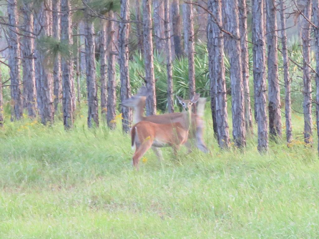 deer-blur