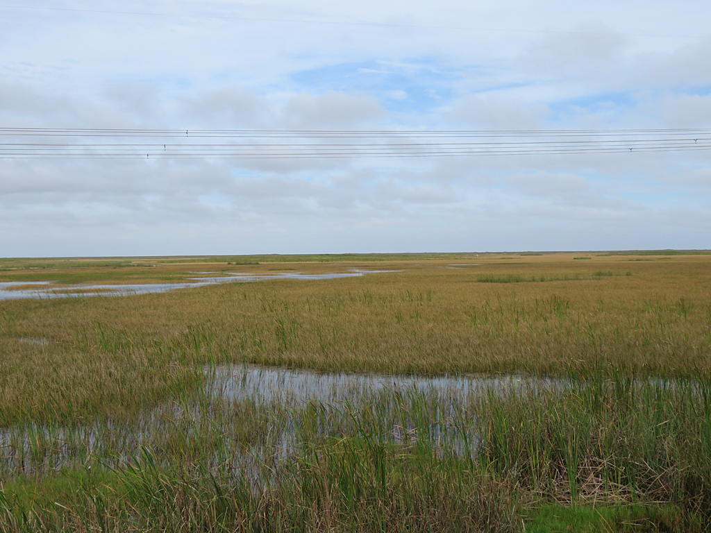 The golden and green grasses of the Everglades, with some patches of open water, stretch out to the horizon under mostly overcast skies. Powerlines cross the foreground between the horizon and top of the photo.