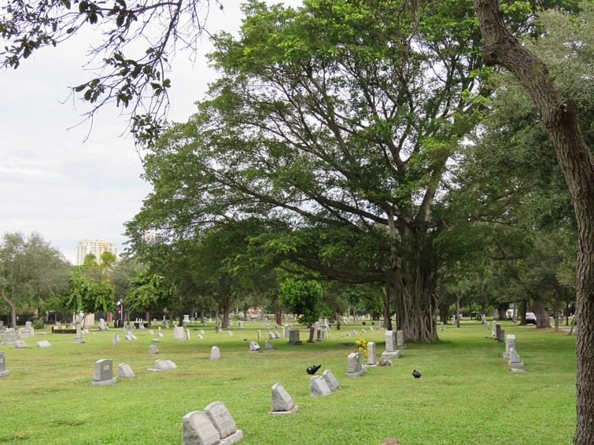 Wide shot of a cemetery with a large tree on the right side. There are a few Muscovy ducks wandering among the graves.