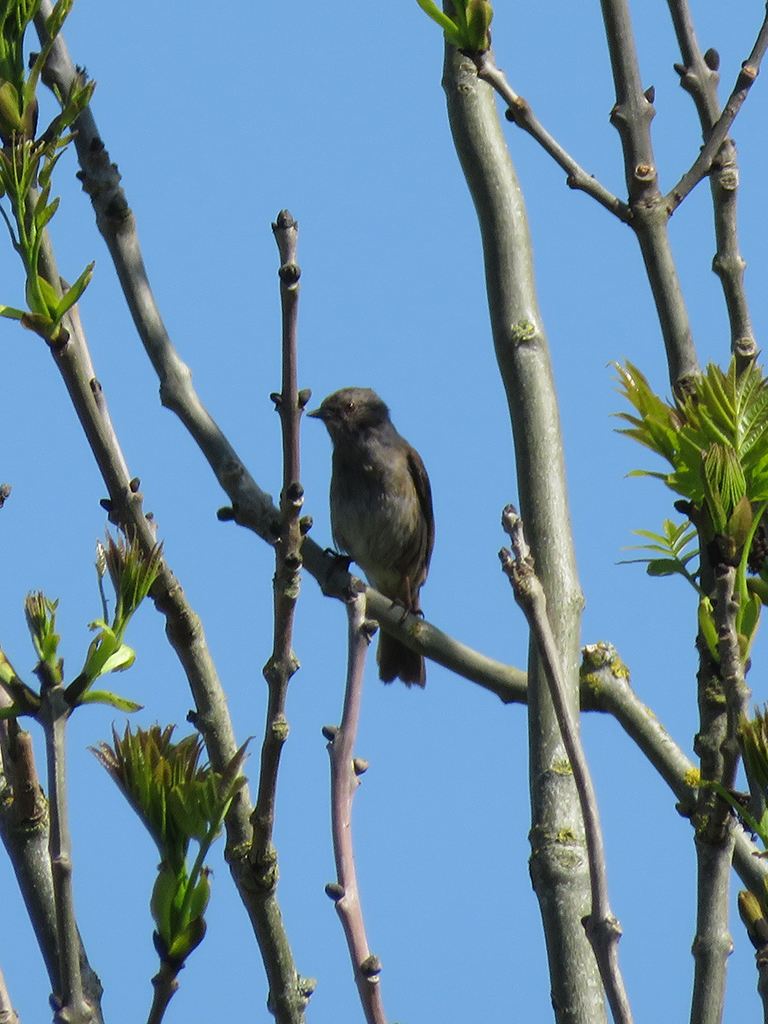 Another small songbird perched on a young tree's branch.