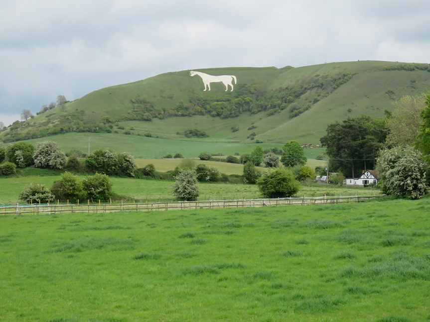 white-horse03