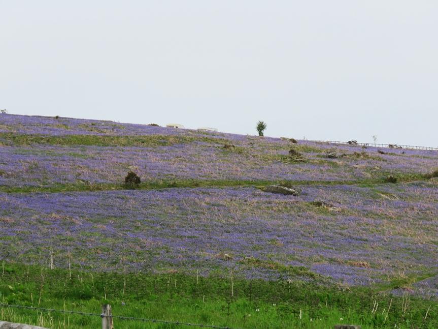 Dartmoor_01