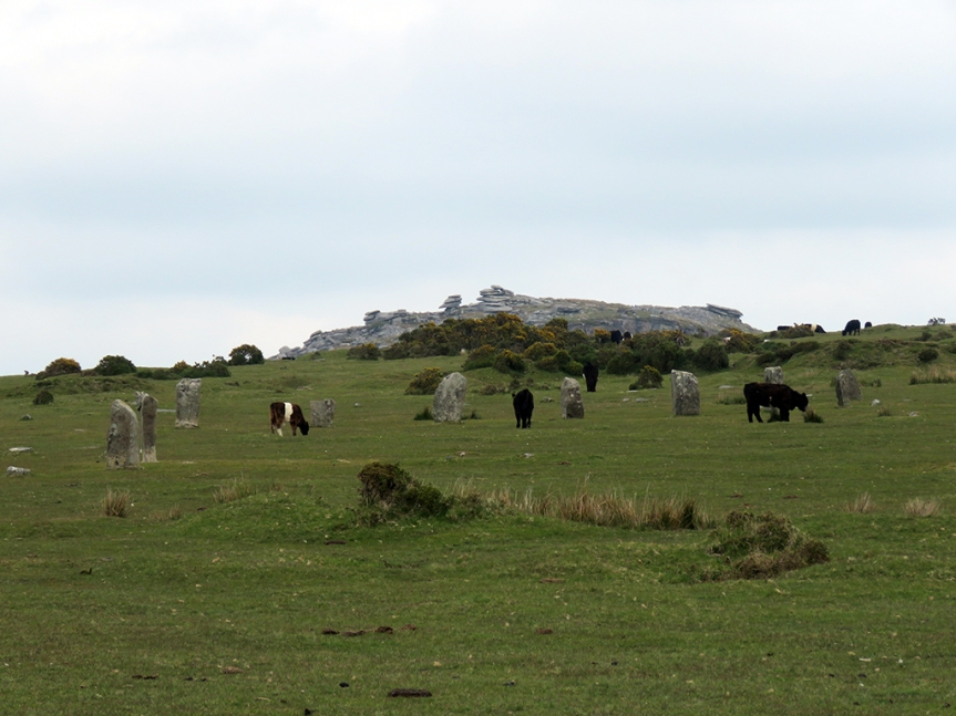 Cows grazing among monument stones and a granite outcrop in the background.