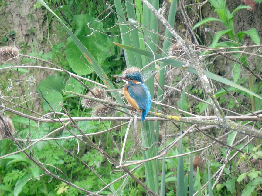 Small turquoise bird with orange breast and belly and long bill.