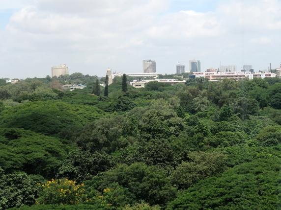 Cubbon Park from my hotel room.