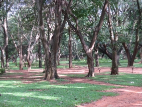 More of Cubbon Park. I visited the park several times, as it was a quick walk from the hotel.