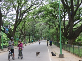 Cubbon Park Road.