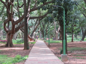 Still Cubbon Park. This has been a protected green space for over 150 years.